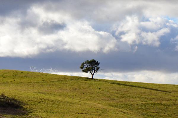 arbre-solitaire